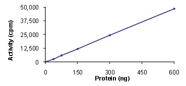 Functional Studies - SLK protein (Active) (ab89590)