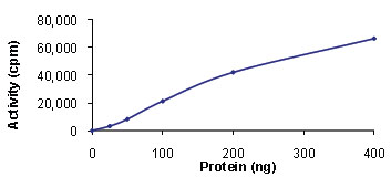 Functional Studies - TAK1 + TAB1 protein (Active) (ab89692)
