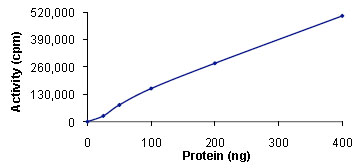 Functional Studies - Snf1lk2  protein (Active) (ab89856)