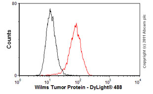 Flow Cytometry-Anti-Wilms Tumor Protein antibody(ab89901)