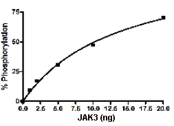 Functional Studies - JAK3 protein (Active) (ab89982)