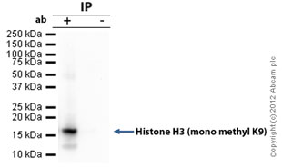 Immunoprecipitation - Anti-Histone H3 (mono methyl K9) antibody - ChIP Grade (ab9045)
