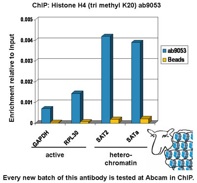 ChIP - Histone H4 (tri methyl K20) antibody - ChIP Grade (ab9053)