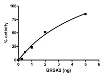 Functional Studies - BRSK2 protein (Active) (ab90011)