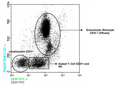 Flow Cytometry - CD31 antibody [TP1/15] (FITC) (ab91174)