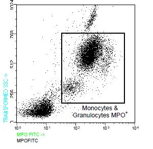 Flow Cytometry - Myeloperoxidase antibody [7,17] (FITC) (ab91237)