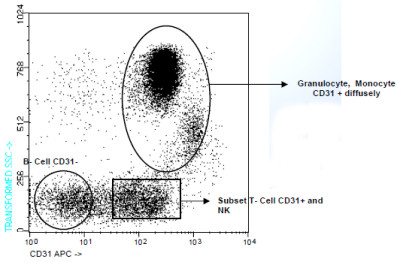 Flow Cytometry - CD31 antibody [TP1/15] (Allophycocyanin) (ab91387)