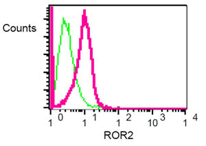 Flow Cytometry - ROR2 antibody [EPR3779] (ab92379)