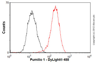 Flow Cytometry - Anti-Pumilio 1 antibody [EPR3795] (ab92545)