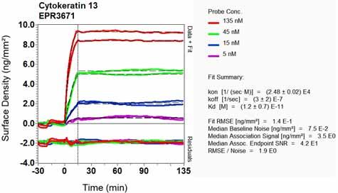 Other-Anti-Cytokeratin 13 antibody [EPR3671](ab92551)