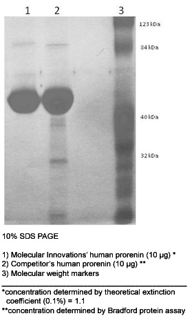 SDS-PAGE - Prorenin protein (Active) (ab93266)