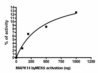 Functional Studies - MEK6 protein (Active) (ab95252)