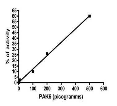 Functional Studies - PAK6 protein (Active) (ab95321)
