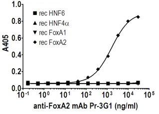 Indirect ELISA - FOXA2 antibody [PR-3G1] (ab95327)