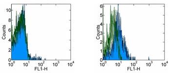 Flow Cytometry - CCR9 antibody [CW-1.2] (FITC) (ab95670)