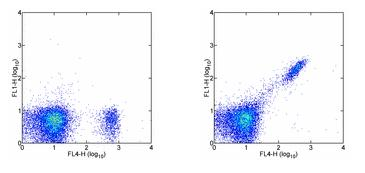 Flow Cytometry - CD8 beta antibody [H35-17.2] (FITC) (ab95773)