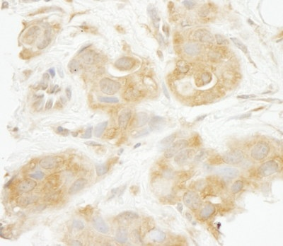 Immunohistochemistry (Formalin/PFA-fixed paraffin-embedded sections) - SEC23IP antibody (ab95903)