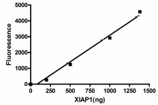 Functional Studies - XIAP protein (Active) (ab95933)