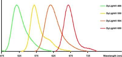 DyLight®-Sheep polyclonal Secondary Antibody to Rabbit IgG - H&L (DyLight® 650)(ab96926)