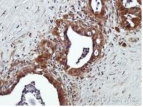 Immunohistochemistry (Formalin/PFA-fixed paraffin-embedded sections) - GPCR GPR120 antibody (ab97272)