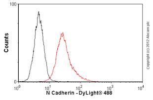 Flow Cytometry-Anti-N Cadherin antibody [5D5](ab98952)