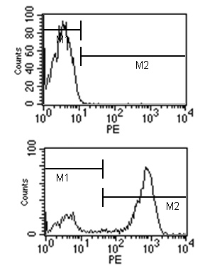 Flow Cytometry - Rat monoclonal [SB77e]  Secondary Antibody to Mouse IgG1 (PE), pre-adsorbed (ab99605)