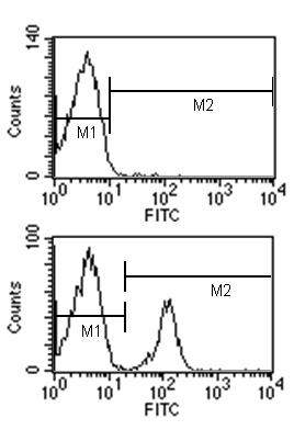 Flow Cytometry - Mouse monoclonal [G1 7E7]  Secondary Antibody to Rat IgG1 - heavy chain (Biotin) (ab99656)