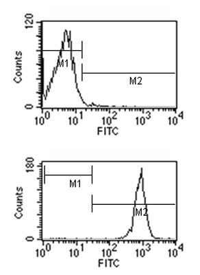 Flow Cytometry - Mouse monoclonal [2B 10A8]  Secondary Antibody to Rat IgG2b - gamma chain (FITC) (ab99671)