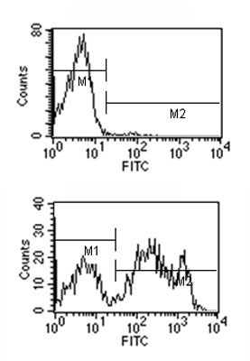 Flow Cytometry - Mouse monoclonal [2C 8F1]  Secondary Antibody to Rat IgG2c - gamma chain (FITC) (ab99677)