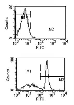 Flow Cytometry - Mouse monoclonal [M 2A1]  Secondary Antibody to Rat IgM - mu chain (FITC) (ab99683)
