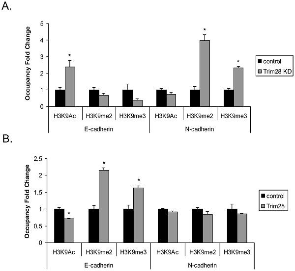 ChIP - Anti-Histone H3 (di methyl K9) antibody [mAbcam 1220] - ChIP Grade (ab1220)