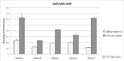 ChIP - Anti-p55/DCAF1 antibody (ab1766)