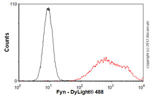 Flow Cytometry-Anti-Fyn antibody [FYN-01](ab1881)