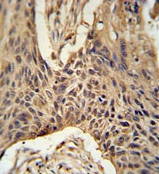 Immunohistochemistry (Formalin/PFA-fixed paraffin-embedded sections) - Anti-LPPR4 antibody (ab104104)
