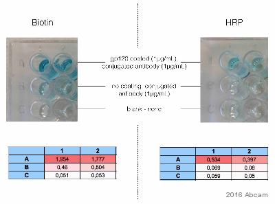 viren gp120 hiv immunoblot