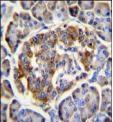 Immunohistochemistry (Formalin/PFA-fixed paraffin-embedded sections) - Anti-C12orf29 antibody (ab107423)
