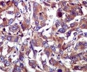 Immunohistochemistry (Formalin/PFA-fixed paraffin-embedded sections) - Anti-Caspase-1 antibody [EPR4321] (ab108362)