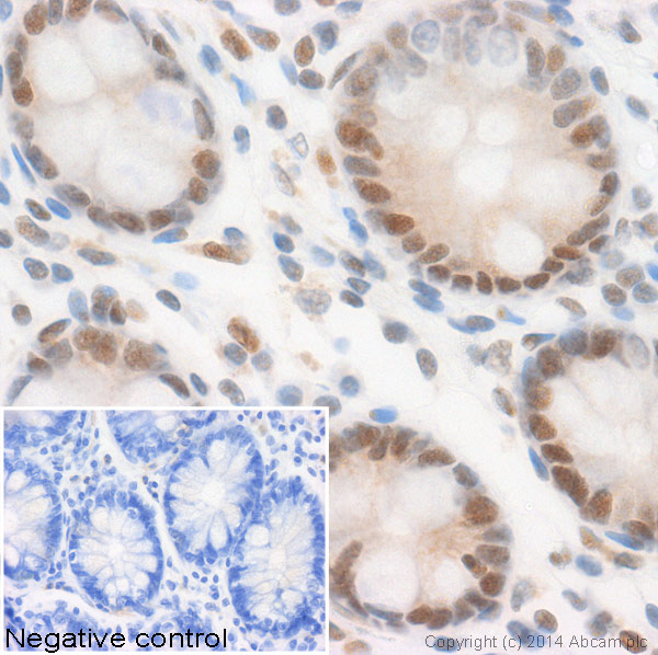 Immunohistochemistry (Formalin/PFA-fixed paraffin-embedded sections) - Anti-Histone H3 (acetyl K4) antibody (ab113672)