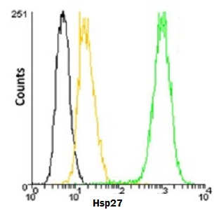 Flow Cytometry - Anti-Hsp27 antibody [G3.1] (DyLight® 488) (ab115639)
