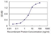 Sandwich ELISA - Anti-DMT1 antibody [4C6] (ab117544)