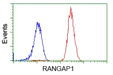 Flow Cytometry - Anti-RanGAP1 antibody [OTI1B4] (ab119092)