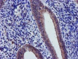 Immunohistochemistry (Formalin/PFA-fixed paraffin-embedded sections) - Anti-CHCHD5 antibody [OTI4F3] (ab119428)