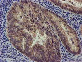 Immunohistochemistry (Formalin/PFA-fixed paraffin-embedded sections) - Anti-CHCHD5 antibody [OTI4F3] (ab119428)