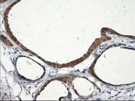 Immunohistochemistry (Formalin/PFA-fixed paraffin-embedded sections) - Anti-RGS16 antibody [OTI4C9] (ab119925)