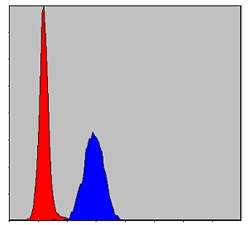 Flow Cytometry - Anti-ERK1 antibody [1E5] (ab119933)