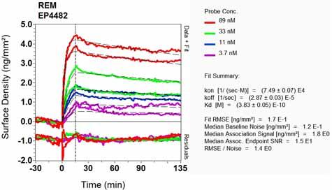 Other - Anti-REM antibody [EP4482] (ab124703)