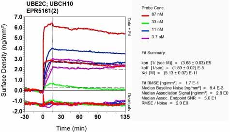 Other - Anti-UBE2C antibody [EPR5161(2)] (ab125002)