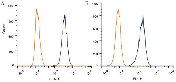 Flow Cytometry - Anti-Dnmt3a antibody [64B1446] - ChIP Grade (ab13888)
