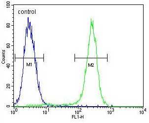 Flow Cytometry - Anti-C1QL4 antibody - N-terminal (ab170291)
