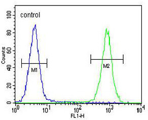 Flow Cytometry - Anti-CAMSAP1 antibody - N-terminal (ab170348)